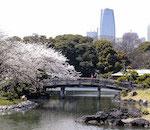 Tour di Tokyo tsukiji e Asakusa in italiano