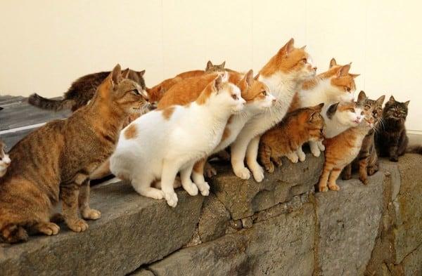 Aoshima: l'isola giapponese dei gatti