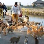Aoshima, l'isola dei gatti