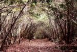 Aokigahara (Jukai), la foresta dei suicidi