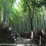 Arashiyama e Sagano